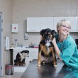 Stock Photo: Female veterinary