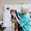 Veterinarian and assistant in a small animal clinic — Stock Photo #8772181