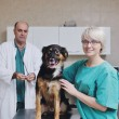 Veterinarian and assistant in a small animal clinic — Stock Photo