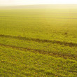Green grass on a background beautiful sunset — Stock Photo