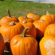 Pumpkins background — Stock Photo #9535479