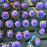 Artichoke purple flower — Stock Photo