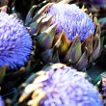 Artichoke purple flower — Stock Photo #9535834