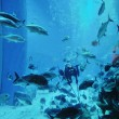 Aquarium with fishes and reef — Stock Photo