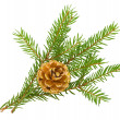 Stock Photo: Fir branch with cone