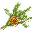 Fir branch with cone - Stock Photo