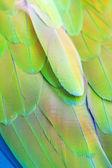 Papuga pierze — Zdjęcie stockowe