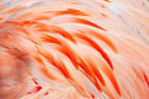 Flamingo feathers — Stock Photo