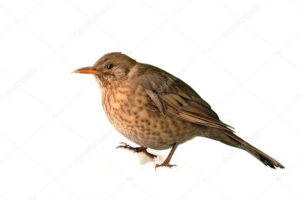 动物 鸟 鸟类 雀