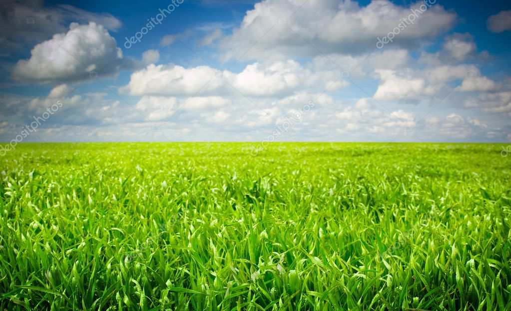 Background of cloudy sky and grass  Stock Photo #8797537