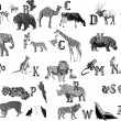 Stock Vector: Grey animals alphabet