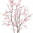 Isolated cherry tree with pink flowers — Stock Vector #8543895