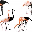 Four pink flamingo on white — Stock Vector