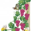 Butterflies and pink grapes - Stock Vector