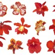 Twelve red orchids set — Stock Vector