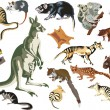 Set of marsupial animals isolated on white - Stock Vector