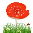 Red single fly-agaric in green grass illustration - Stock Vector