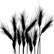 Wheat silhouettes isolated on white - Stock Vector