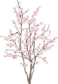 Isolated cherry tree with pink flowers — Stock Vector