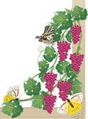 Butterflies and pink grapes — Stock Vector