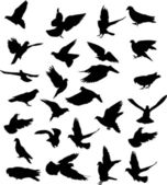 Twenty six pigeon black silhouettes — Stock Vector
