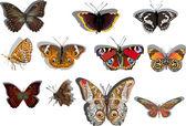 Eleven orange and brown butterflies — Stock Vector