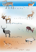 Set of color deers and its tracks — Stock Vector