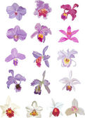 Sixteen lilacand white orchids — Stock Vector