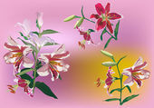 Collection of lily flowers on pink background — Stock Vector