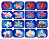 Set of sixteen orchid flowers on blue — Stock Vector