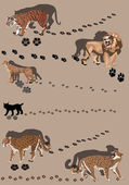 Six big cats with tracks — Stock Vector