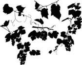 Uppsättning av druvor och blad på vit — Stockvektor