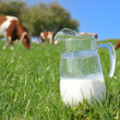 Jug of milk against herd of cows. Emmental region, Switzerland — Stockfoto #8299972