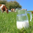 Jug of milk against herd of cows. Emmental region, Switzerland - Stock Photo