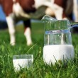Royalty-Free Stock Photo: Jug of milk against herd of cows. Emmental region, Switzerland