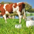 Cow and jug of milk. Emmental region, Switzerland — Stockfoto #8299991