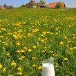 Jug of milk on meadow. Emmental region, Switzerland — Stock Photo #8300014