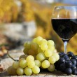 Wine and grapes on terrace vineyard in Lavaux region, Switze — Stock Photo #8300531