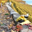 Wine, grapes and cheese against vineyards in Lavaux region, Swit — Stock Photo #8300558