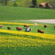 图库照片: Spring in Emmen valley (Emmental), Switzerland