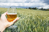 Glass of beer in the hand against barley ears — Stock Photo
