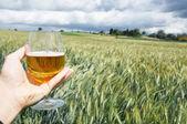 Verre de bière à la main contre les épis d'orge — Photo