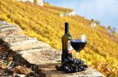 Rode wijn en grapeson de wijngaard met terras in lavaux-gebied, swi — Stockfoto