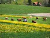 Spring in Emmen valley (Emmental), Switzerland — Stock Photo
