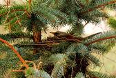 Nest tree — Stock Photo