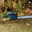Man shear a tree - Stock Photo