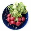 Bunch of radishes in a dish — Stock Photo