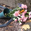 Flowers at a grave — Stock Photo