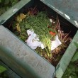 Stock Photo: Black plastic compost bin in allotment garden