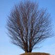 Stock Photo: Tree and sky